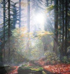 http://www.torindiegalaxien.de/Bilder-neu20-02-11/erde/herbs-t-4.jpg